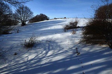 La volpe e l' inverno