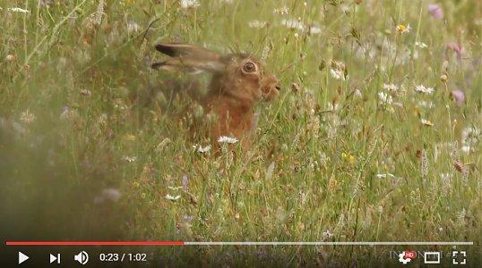 Lepre Simbruini -video
